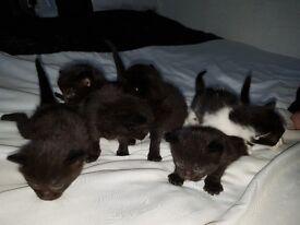 5 black kittens and 1 black.