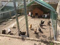 chicken run 20 x 10