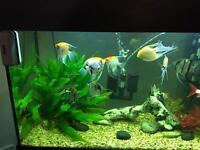 Juwel aquarium with fish