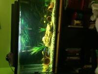 40 gallon tank for sale!