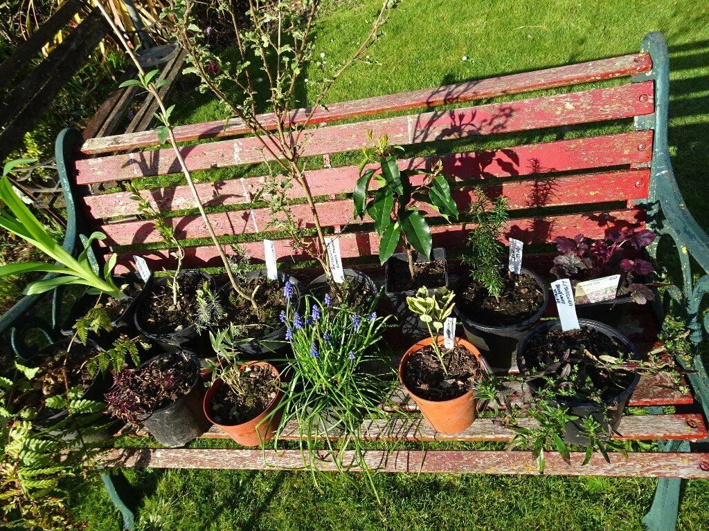 Plants, 1 pound each  | in Aylsham, Norfolk | Gumtree