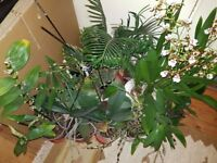 Orchid Bargain !! 11 Orchids + 1 cycad, the whole lot must go now, moving house.