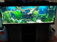5 FT JEWEL RIO 450 LITRE FISHTANK IN BLACK IN GOOD CONDITION