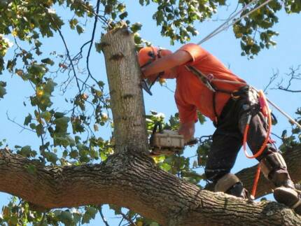 Tree Services (Compare Prices) - Brisbane