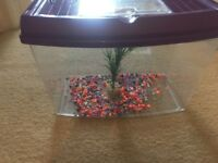 2x fish tanks with pebbles and small plant