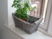 Small basket, suitable for indoor plants
