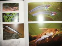 AQUARIUM / FRESH WATER FISH BOOK