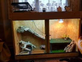 Bearded dragon and set up