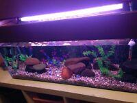 3ft aquarium for sale