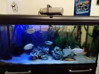 3.5ft Aquarium Full Setup