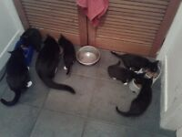 Kittens for sale litter trained and ready now all eating well £50