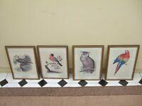 Set of four exotic bird prints