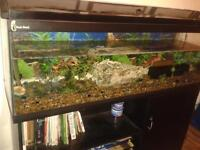 Clear Seal Fish Tank with base cabinet.
