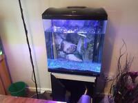 Fish tank aquarium boyu