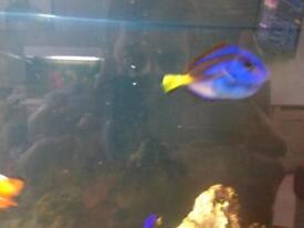 Marine fish and inverts
