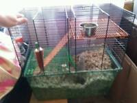 2 female Gerbils with big cage.