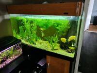 Tropical aquarium and fishes