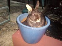 *FREE* Beautiful pet rabbit needs loving new home