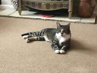 Two Cats Need a loving home