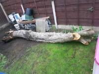 Free wood Tree trunk