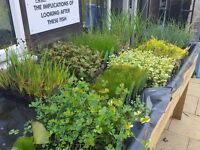 Pond and Aquatic Plants