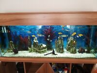 Bespoke Fish tank and solid oak stand