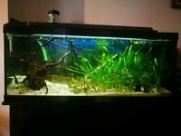 3 foot tropical fishtank