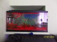 Aquariums -- fish tank