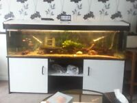 6ft by 18 inches Tropical fish tank set up..288 litres