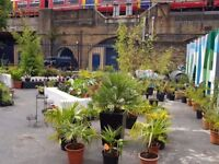 Garden Centre Vauxhall central London palms cactus succulents, garden plants grown in our nursery