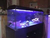 4ft Fish Tank with LED lights, pumps and accessories come with