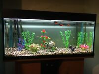 A very well maintained tropical fish tank