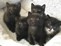 Cute kittens looking for a loving home