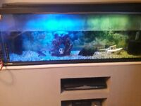3 fish tanks for sale 1 large 2 small
