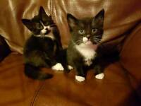 4 kittens, ready Monday (28th May)