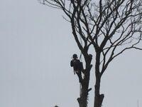Top Notch Pembrokeshire: Grass cutting, hedge cutting, tree surgery