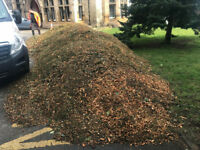 FREE Wood Chippings