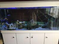 BOYU 5ft 520ltr aquarium set up! Fish tank NEED GONE ASAP