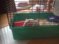 Female Hamster & Cage