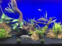 Aqua one oak 240 litre fish aquarium and cabinet and accessaries