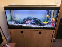 Roma 240 Fish tank , Oak base , + all equipment