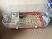 2 Male Guinea Pigs and Full Set Up