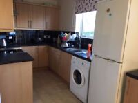 3 bed house with garden in finaghy available 1st november