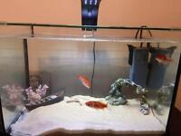 Starter tank with 3 goldfish