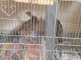 Bird titar