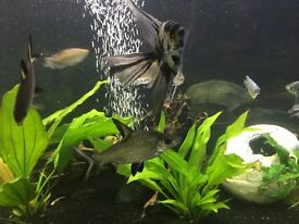 Assorted fish -bunch