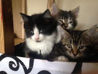 Gorgeous cute kittens for sale.