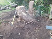 Remove Tree / Stump - I need someone to remove a stump or grind it for me