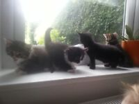 4 beautiful kittens for sale gloucester