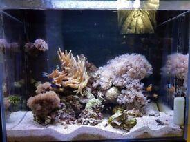 Marine Aquarium - Complete Setup with Livestock